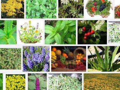 Sedef Hastalığından Bitkilerle Kurtulanlar